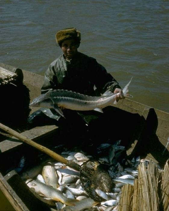 Многие рыболовы, занимавшиеся промыслом осётра, приезжали из Казахстана. СССР, Астраханская область, 1960-е годы.
