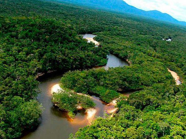 Колумбийский тропический лес