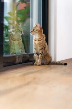 Стерилизация и кастрация кошек: отличия и последствия