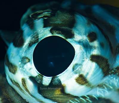 Фотограф придумал, как показать разнообразие животного мира. Фото