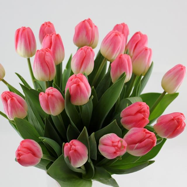Картинки по запросу красивые букеты тюльпаны картинки