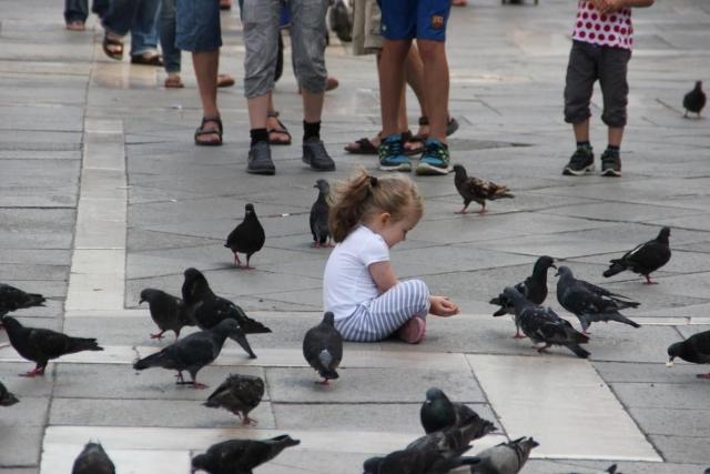 В городе голуби становятся почти ручными. Они без опаски клюют корм из детских ладошек