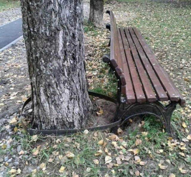 Скамейка на привязи.