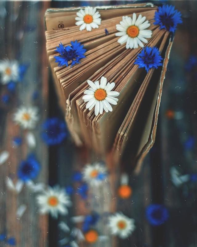 Фото: Невероятные натюрморты, которые переносят в мир идиллии (Фото)