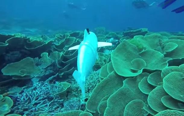 Рыба-робот будет шпионить за морскими животными